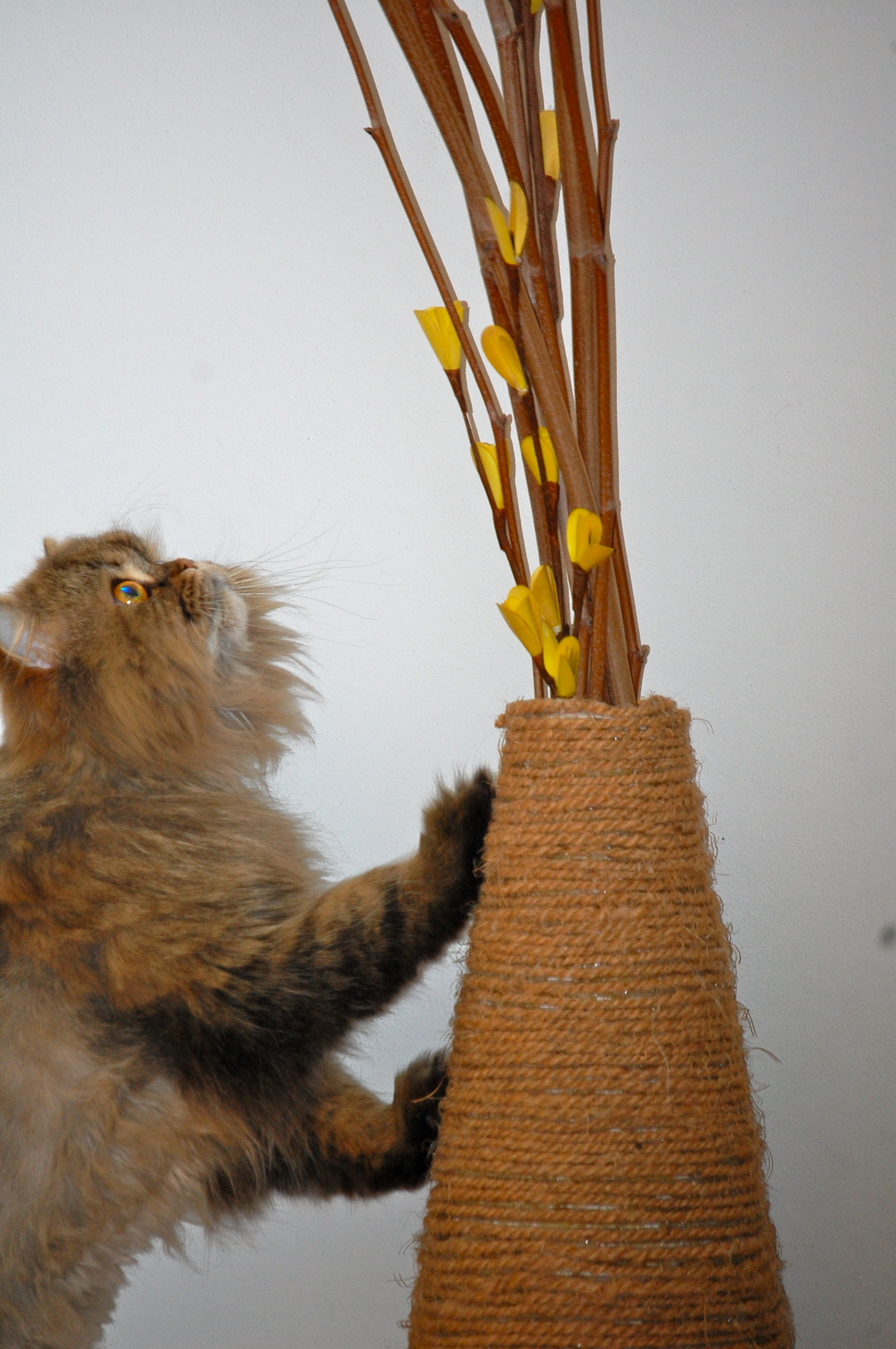 Diy Vase Scratching Post Update Meow Lifestyle