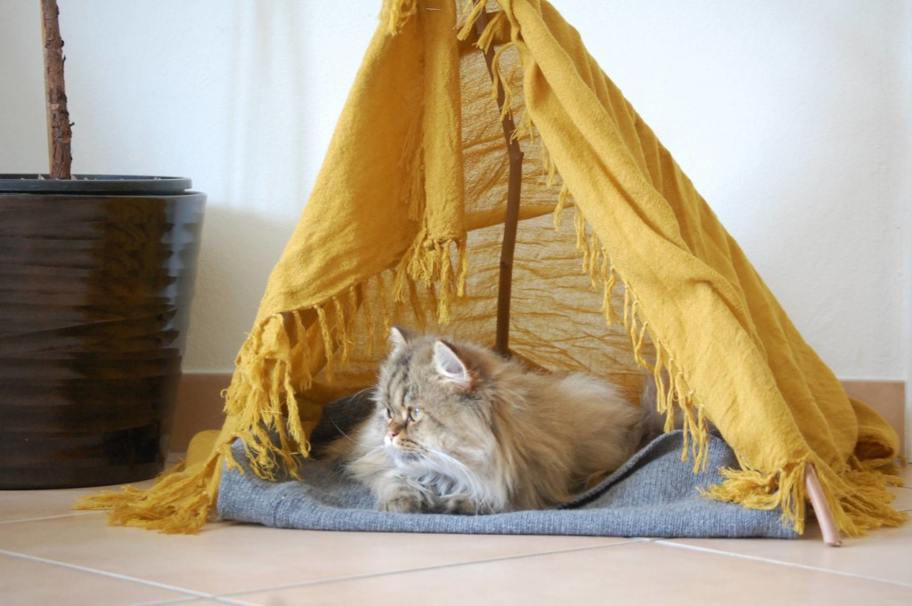 DIY cat tepee