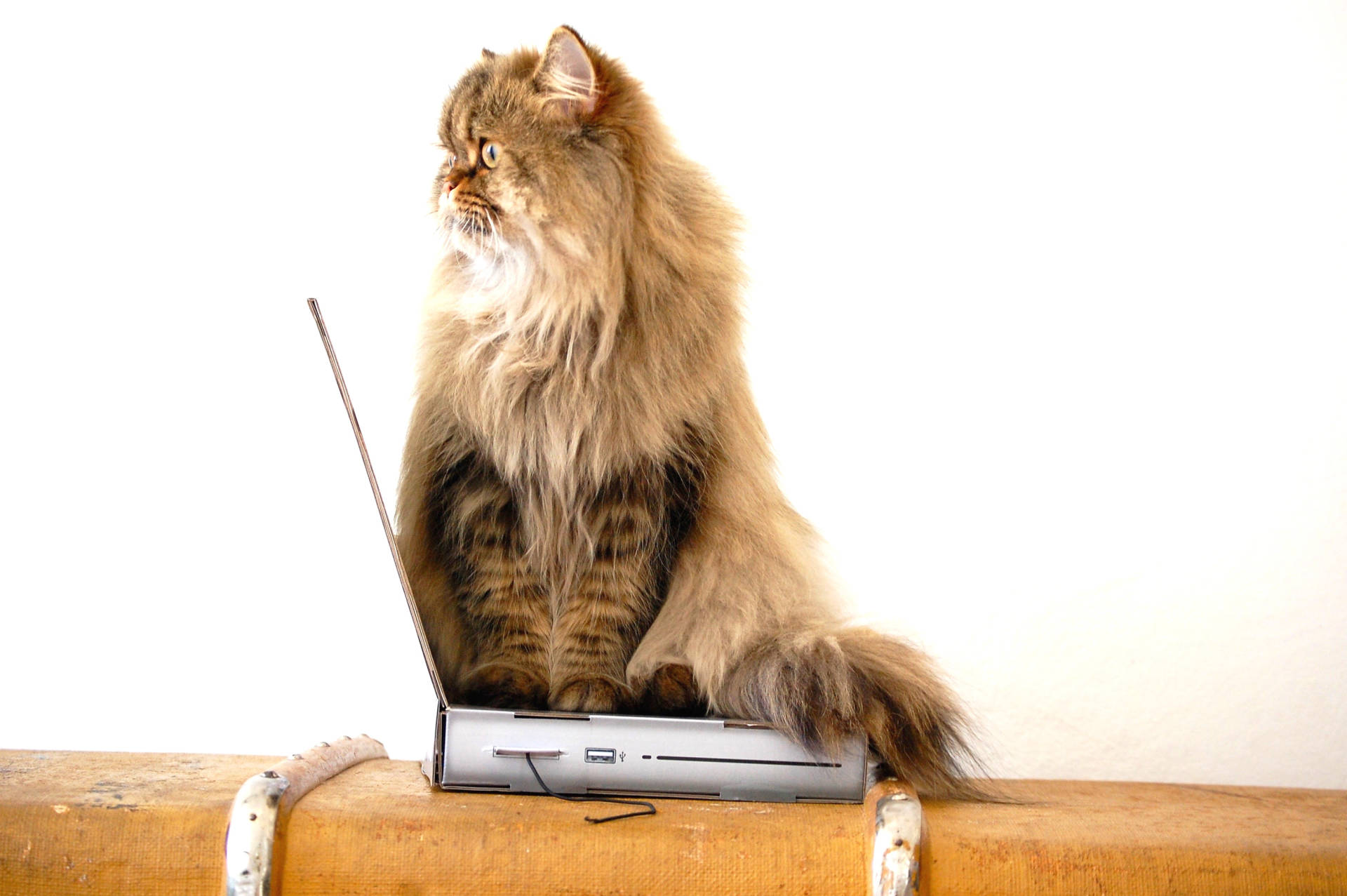 Cat Laptop scratcher
