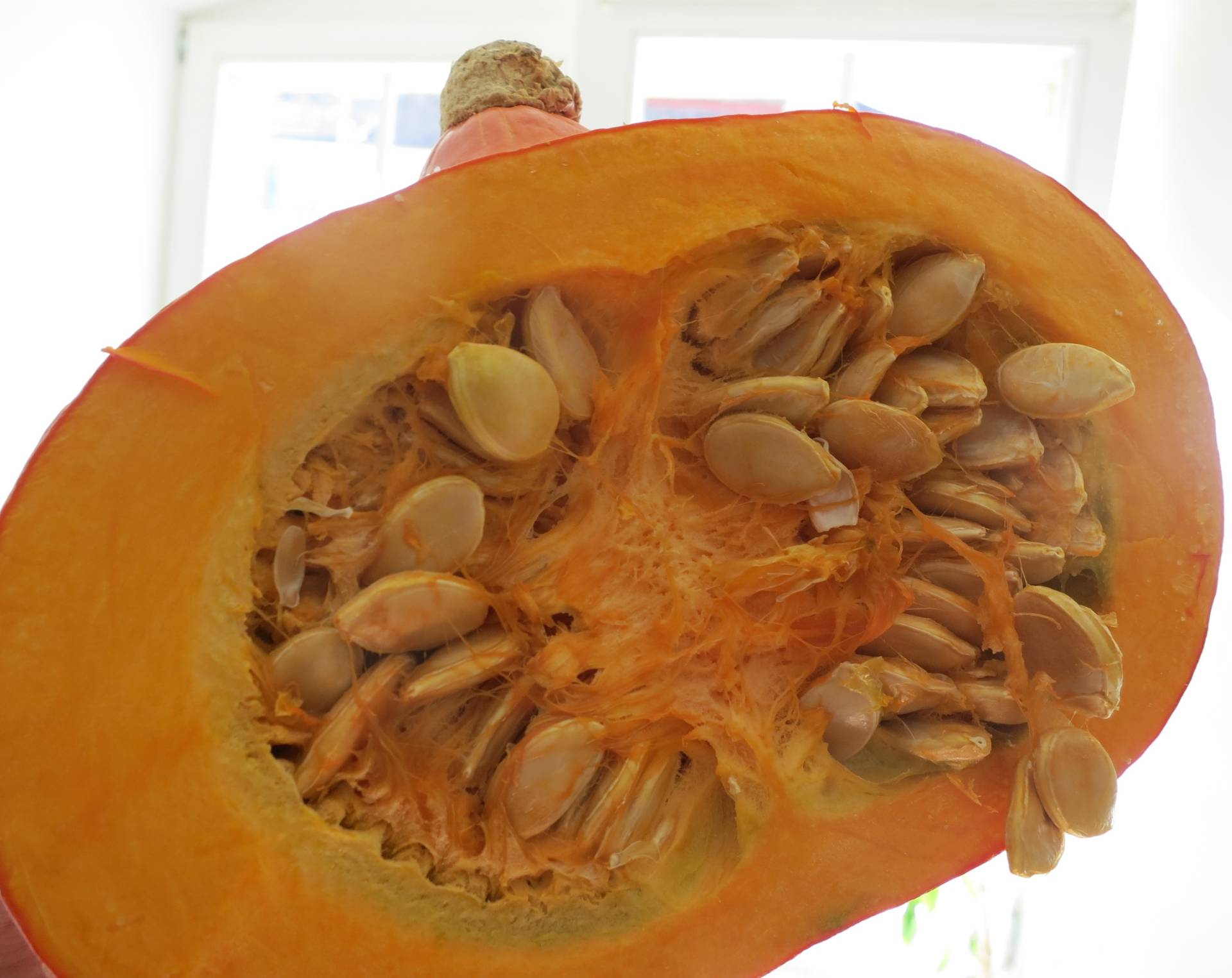 pumpkin for cats
