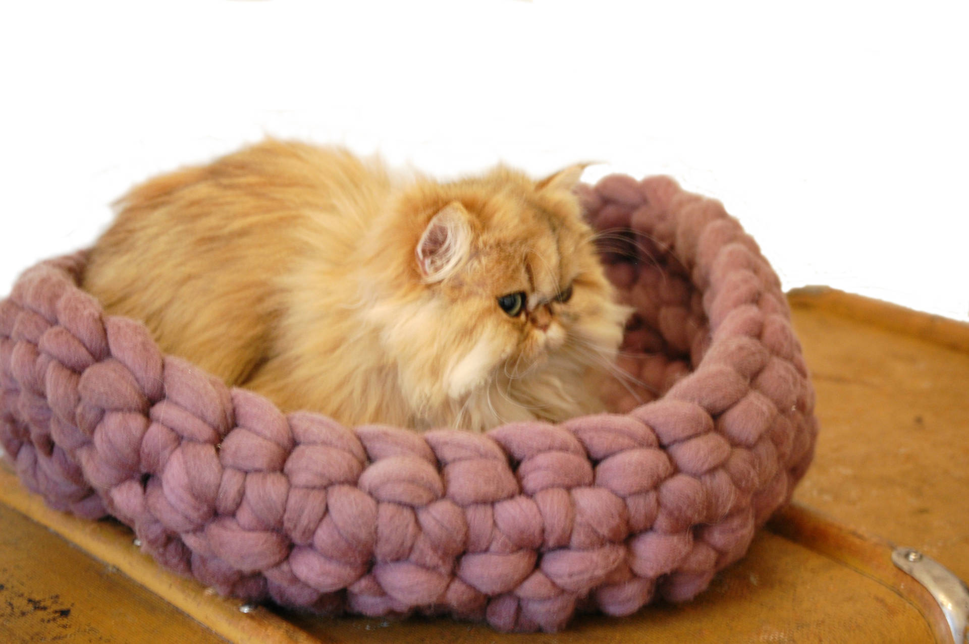 hand-made wool cat bed