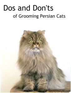 Dos and Don'ts of Grooming Persian Cats