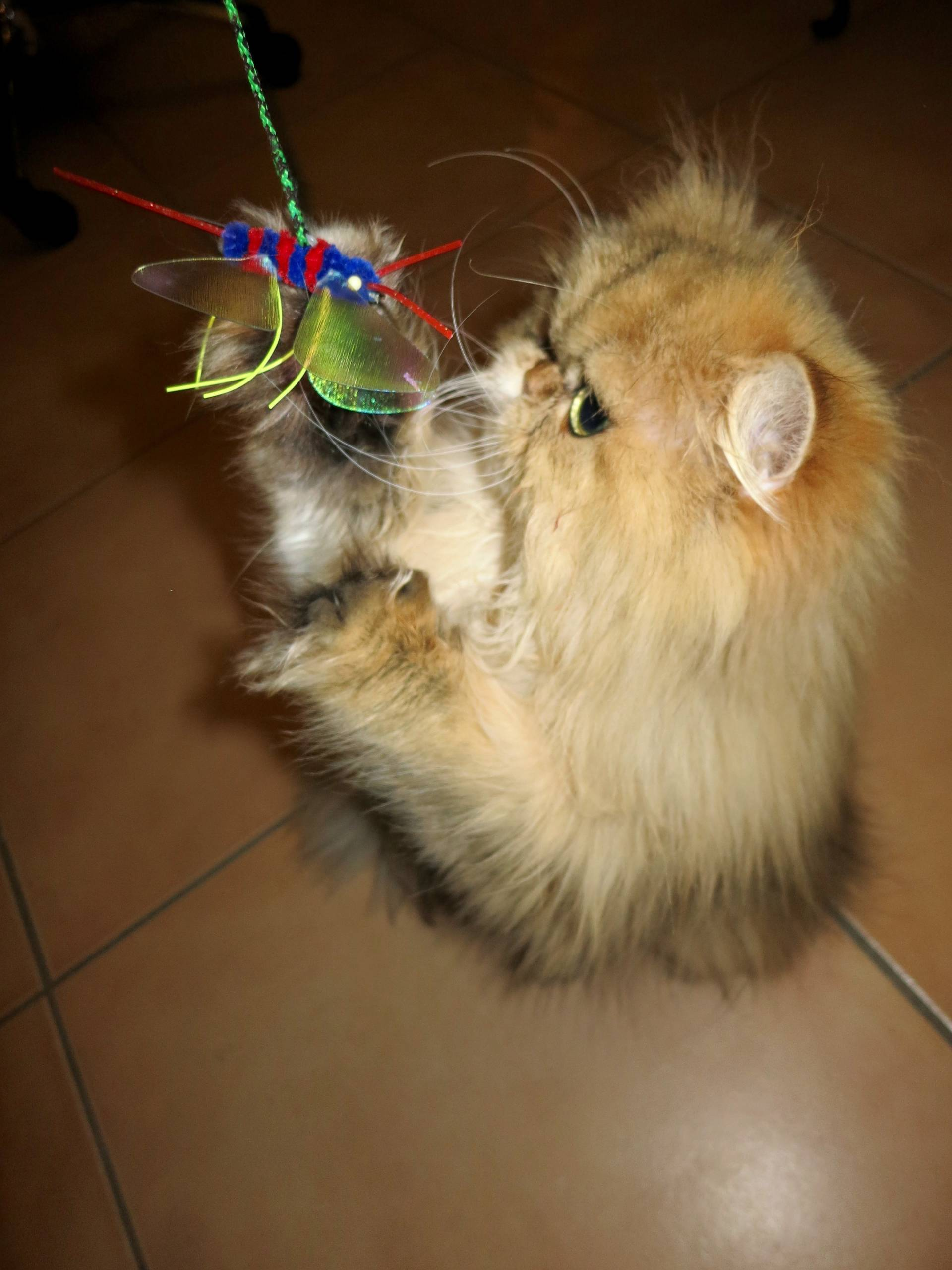 Neko Flies cat toy