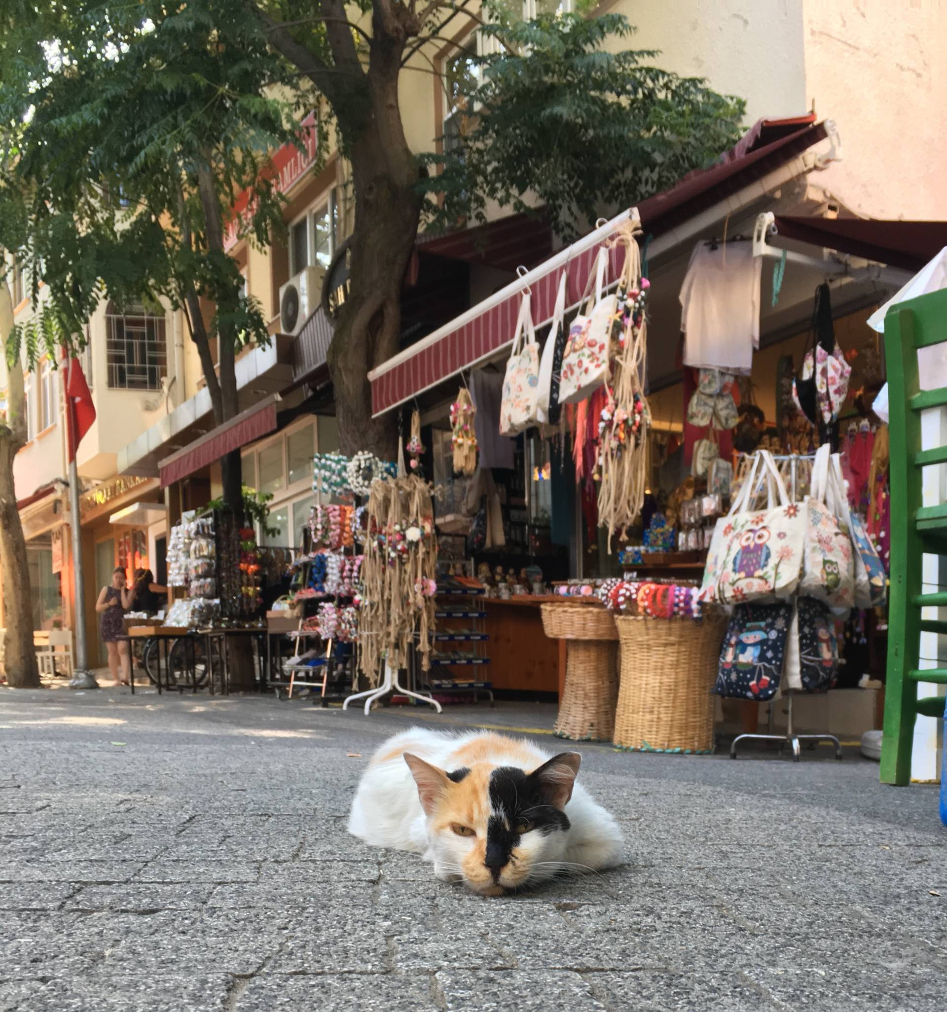 Istanbul is a magical city full of affectionate well-kept beautiful cats. Istanbul has a long tradition of respecting and adoring its cats.