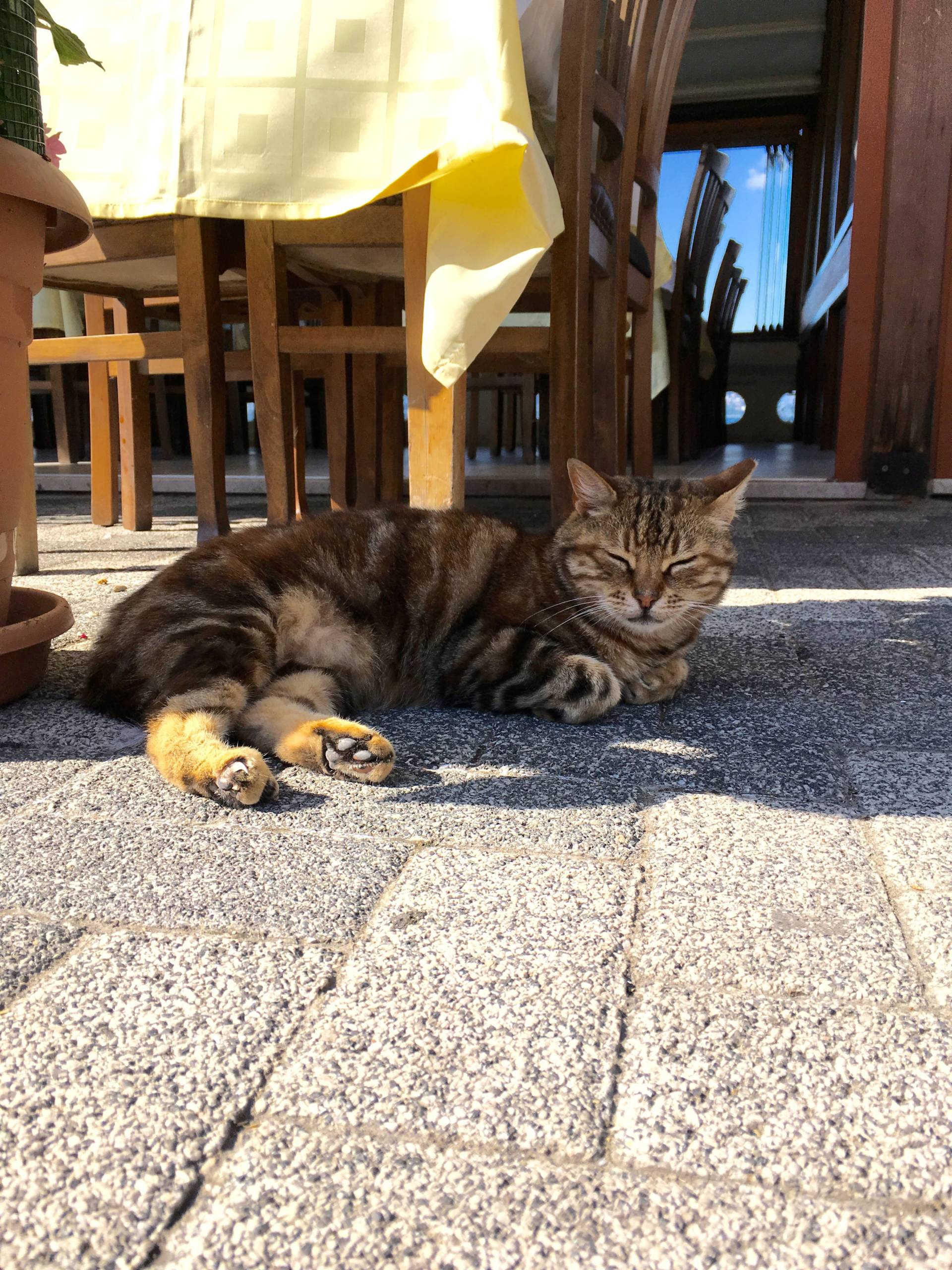 Cats of Istanbul | Meow Lifestyle