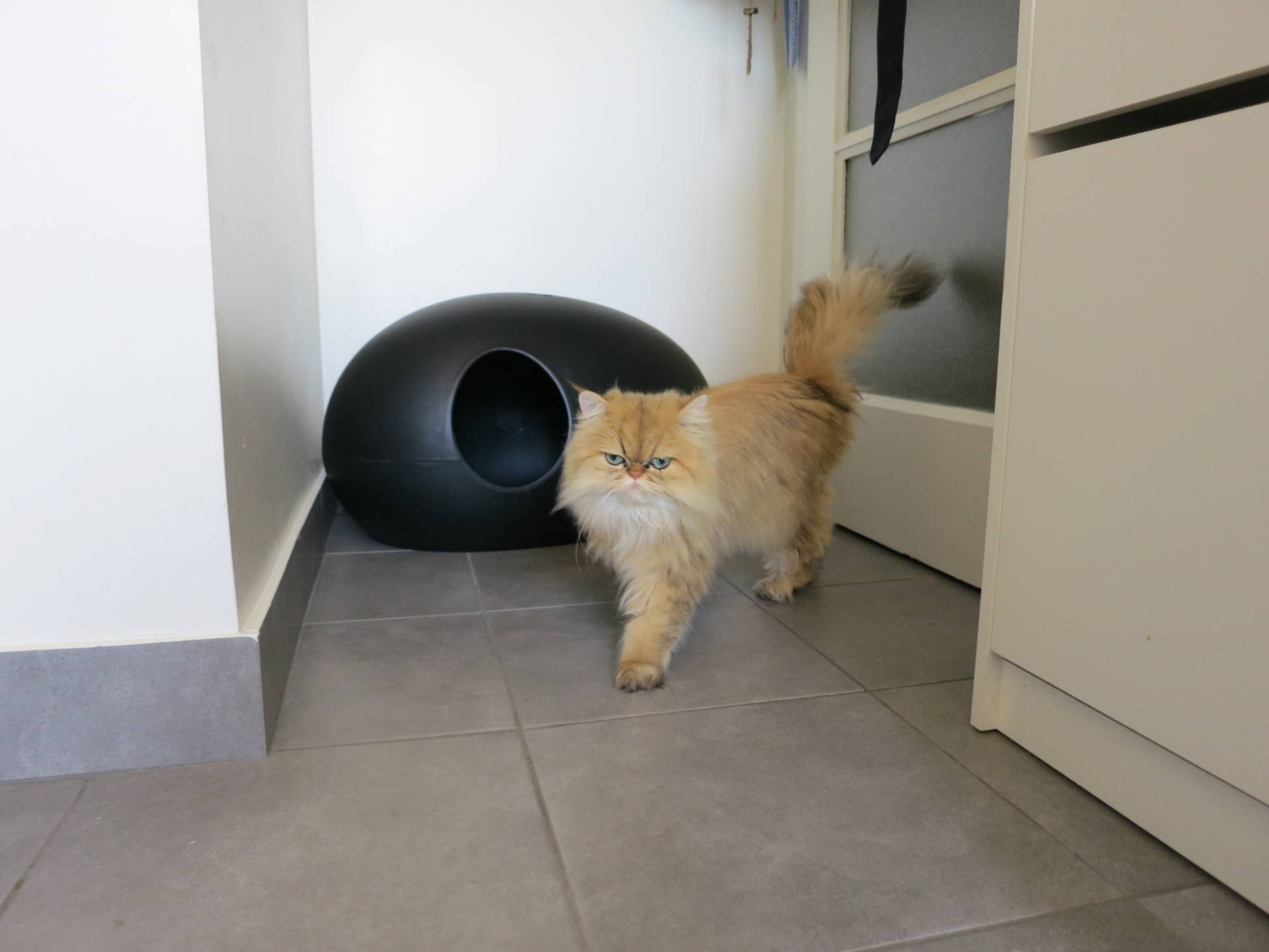 Poopoopeedo Litter Box Update Meow Lifestyle