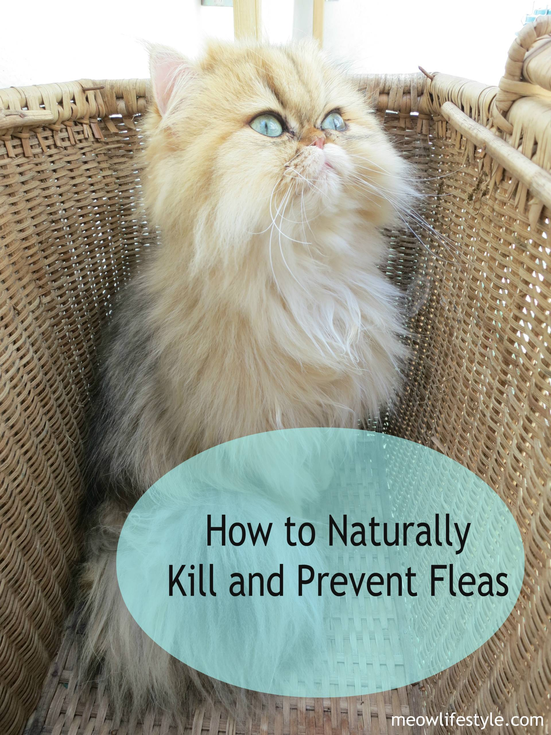 How to Naturally Kill and Prevent Fleas