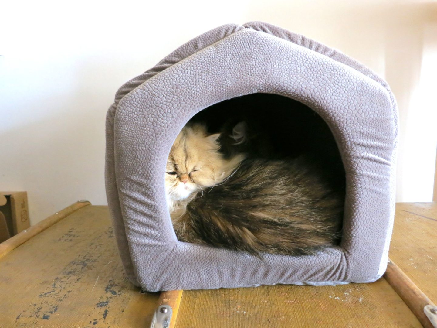 PAWZ Road cat house