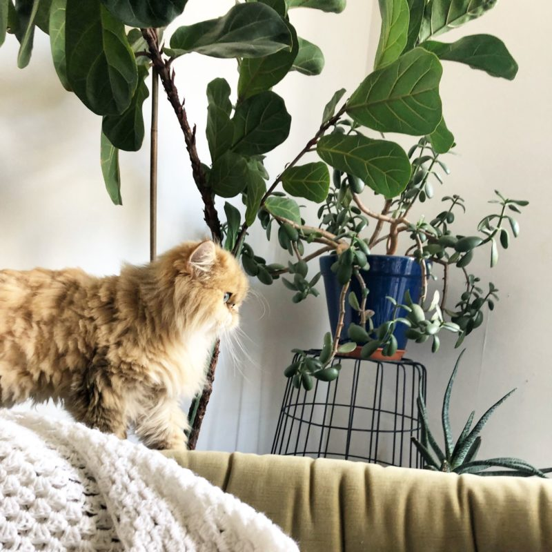 How to Protect Houseplants from Cats