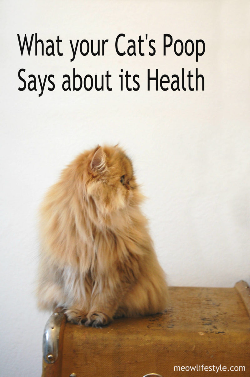 What Your Cat S Poop Says About Its Health Meow Lifestyle