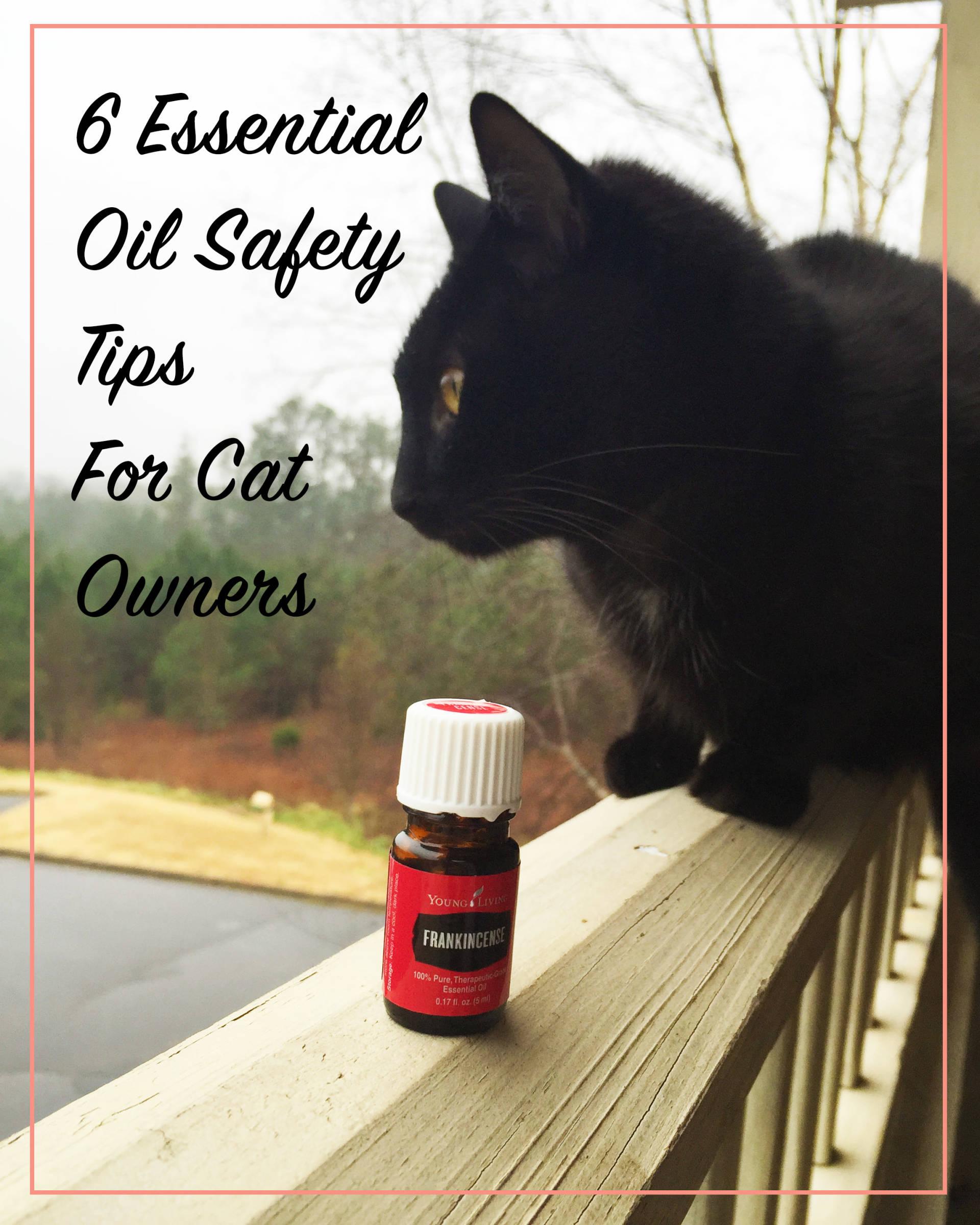 6 conseils de sécurité pour les huiles essentielles à l'intention des propriétaires de chats